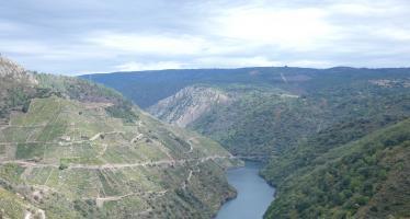 Camino de Invierno desde Monforte de Lemos